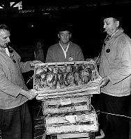 0150680 © Granger - Historical Picture ArchiveLES HALLES.   Delivery of game at covered market in Paris on september 7, 1959 after the opening of the shooting season. Full credit: AGIP - Rue des Archives / Granger, NYC -- All Rights Reserved.