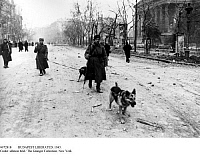 0072818 © Granger - Historical Picture ArchiveBUDAPEST LIBERATED, 1945.   Budapest after the liberation by the Red Army: Soviet soldiers moving with German Shepherds through a street, January 1945. Picture taken by Yevgeny Khaldei. Full credit: Voller Ernst - ullstein bild / Granger, NYC -- All Rights Reserved.
