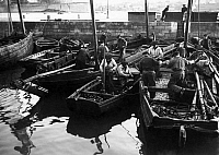 0217528 © Granger - Historical Picture ArchiveLABOR.   France - Bretagne Brittany - Sardines-fishermen land with their fishing boats at the harbor. - Photographer: M.Rol - 1913 Vintage property of ullstein bild.