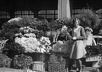 0230189 © Granger - Historical Picture ArchivePEOPLE.   German Empire Free State Prussia Brandenburg Province Berlin Flower-market at the market hall Lindenstr. in Berlin. -.