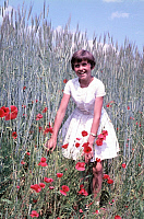 0231982 © Granger - Historical Picture ArchivePEOPLE.   A young girl in a petticoat stands amongst corn poppy flowers in a corn field - 1950ies.