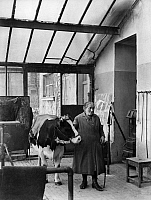 0233193 © Granger - Historical Picture ArchiveFINE ART.   Germany, academies of arts: animal painting class of Angelo Jank at the Academy of Fine Arts Munich, cow Liese with her keeper - Photographer: Wide World Photos - - undated Vintage property of ullstein bild.