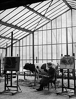 0233207 © Granger - Historical Picture ArchiveFINE ART.   Germany, academies of arts: animal painting class of Angelo Jank at the Academy of Fine Arts Munich, cow Liese with her keeper - Photographer: Wide World Photos - - undated Vintage property of ullstein bild.