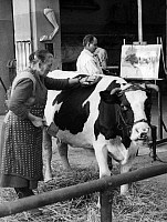 0233211 © Granger - Historical Picture ArchiveFINE ART.   Germany, academies of arts: animal painting class of Angelo Jank at the Academy of Fine Arts Munich, cow Liese with her keeper - Photographer: Wide World Photos - - undated Vintage property of ullstein bild.