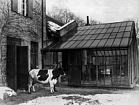 0233455 © Granger - Historical Picture ArchiveFINE ART.   Germany, academies of arts: animal painting class of Angelo Jank at the Academy of Fine Arts Munich, cow Liese with her keeper in front of the studio - Photographer: Wide World Photos - - undated Vintage property of ullstein bild.