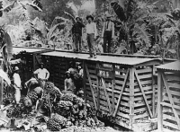 0235389 © Granger - Historical Picture ArchiveTRANSPORTATION.   Costa Rica: banana plantation, loading bananas on goods waggons, published in 1921.