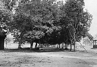 0236309 © Granger - Historical Picture ArchiveGEOGRAPHY.   French equatorial africa: Gabun A mandarine tree avenue planted by order of Pierre Brazza at Lastourville. This territory will be handed over to germany as part of Deutsch-Kamerun according to the traety of 1911 (marocco-traty) Foto: M. Rol.