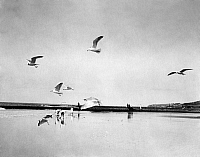 0239039 © Granger - Historical Picture ArchiveGEOGRAPHY.   Germany, East Frisian Islands, Borkum, seagulls on the beach, date unknown.