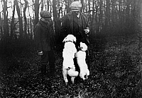 0241737 © Granger - Historical Picture ArchiveNATURE.   France: truffle dogs at work: searching for truffle, after a find, the dogs are receiving a reward of bread crumbs, given by their owner, date unknown around 1911, photo by Topical-Press.