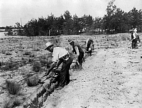 0242302 © Granger - Historical Picture ArchiveECONOMY.   Germany, Brandenburg, Fuerstenberg, cultivation of a pinewood by redundant workers, about 1914.