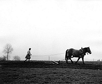 0242873 © Granger - Historical Picture ArchiveECONOMY.   Germany, Bavaria - Countrywoman harrowing with horses a field (Bavarian Forrest) - 1971.