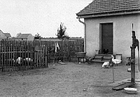 0244099 © Granger - Historical Picture ArchiveAGRICULTURE.   German Empire Kingdom Prussia, economy, unemployment care through internal colonization (original text) - facility for keeping small domestic animals and water pump - 01.06.1913 Vintage property of ullstein bild.