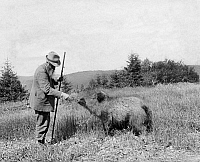 0244273 © Granger - Historical Picture ArchiveANIMAL.   tame animals: tame wild boar and unknown man (forester), date unknown, probably 1909.
