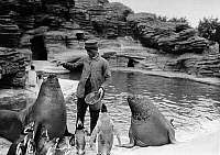 0244285 © Granger - Historical Picture ArchiveANIMAL.   Germany, Zoo Hagenbeck, feeding of walrus and penguin - date unknown, probably 1918 photo by Conrad Huenich.