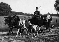 0244634 © Granger - Historical Picture ArchiveANIMAL.   German Empire Free State Prussia - Brandenburg Provinz (Province) - Berlin: pony carriage - Photographer: Heinz Fremke - Published by: 'Berliner Morgenpost' 12.08.1937 Vintage property of ullstein bild.