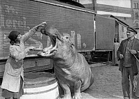 0244644 © Granger - Historical Picture ArchiveANIMAL.   Berlin, circus, woman brushing a hippo's teeth, published in BIZ 17/1921, photo taken by Conrad Huenich - 1921 -.