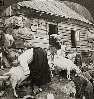0079665 © Granger - Historical Picture ArchiveNORWAY: MILKING, c1925.   Milking the goats on a Mountain Saeter, Hardanger Fjord, Norway. Panel of a stereograph, c1925.