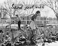 0323132 © Granger - Historical Picture ArchiveFSA SLIDE FILM, c1940.   'Grow your own.' Photograph by Dorothea Lange, from a Farm Security Administration educational slide film, c1940.