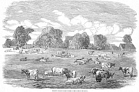 0000851 © Granger - Historical Picture ArchiveENGLAND: CATTLE, 1853.   The great meadow at Friern Manor Dairy Farm, Peckham, England. Wood engraving, English, 1853.