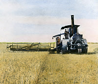 0008470 © Granger - Historical Picture ArchiveSTEAM HARVESTER, 1903.   A steam harvester at work in California cutting a 25-foot swath through a wheat field, 1903.