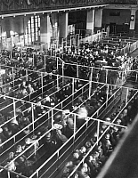 0125102 © Granger - Historical Picture ArchiveELLIS ISLAND, 1906.   Clearance lines in the registry room of the immigration station in New York Harbor, Christmas 1906.