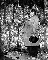 0118564 © Granger - Historical Picture ArchiveNEW YORK: BANANA INDUSTRY.  Sy Bayman, manager of the Curatolo Banana Corporation, in the refrigerator with rows of stored bananas, Brooklyn, New York. Photographed by Dick De Marsico, c1962.