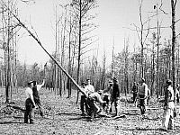 0171185 © Granger - Historical Picture ArchiveNEW DEAL: C.C.C., 1933.   Members of one of the first units of Civilian Conservation Corps recruits clearing ground to set up a campsite, at the start of a reforestation project in a section of George Washington National Forest near Luray, Virginia, 18 April 1933.