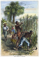 0061349 © Granger - Historical Picture ArchiveSLAVERY: SUGAR PLANTATION.   'Slaves Working on a Plantation.' Slaves cutting cane on a sugar plantation in the American South.   Engraving, c1850.