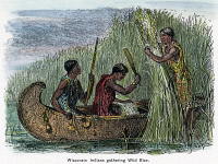 0035908 © Granger - Historical Picture ArchiveNATIVE AMERICANS: GATHERING RICE, 19TH CENTURY.  Wisconsin Native Americans gathering wild rice by canoe. Wood engraving, 19th century.