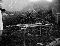 0175353 © Granger - Historical Picture ArchiveCANADA: DRYING BERRIES.   Strawberries and salmonberries drying on a rack made of split cedar in a Nuxalk (or Bella Coola) Native American village in central British Columbia, Canada. Photographed c1900.