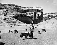 0259100 © Granger - Historical Picture ArchiveARIZONA: NAVAJO SHEPHERD.   12-year-old Shirley Thompson, a Navajo shepherd, watching sheep in the Canyon del Muerto at Canyon de Chelly National Monument in Arizona. Photograph by Fred Mang, Jr., c1965.