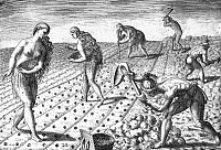 0099387 © Granger - Historical Picture ArchiveFLORIDA NATIVES, 1591.   Florida Native Americans tilling and planting. Line engraving, 1591, by Theodor de Bry after a now lost drawing by Jacques Le Moyne de Morgues.