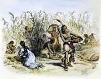 0082664 © Granger - Historical Picture ArchiveHIAWATHA: CORN HARVESTING.   Native American corn harvest. Wood engraving after Felix O.C. Darley from a 19th century edition of Henry Wadsworth Longfellow's 'The Song of Hiawatha.'