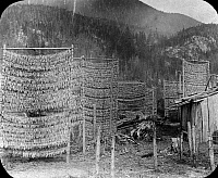 0174599 © Granger - Historical Picture ArchiveCANADA: FISING VILLAGE, 1884.   Eulachon drying on racks in a Nisga'a fishing village at Fishery Bay, on the Nass River in British Columbia, Canada. Photographed by Richard Maynard, 1884.
