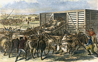 0007780 © Granger - Historical Picture ArchiveCATTLE DROVERS HERDING   Texas longhorn into a boxcar in Abilene, Kansas, along the Kansas-Pacific Railway. American engraving, 1871.
