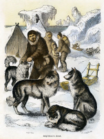 0083328 © Granger - Historical Picture ArchiveESKIMO: SLED DOGS.   Wood engraving, 19th century.