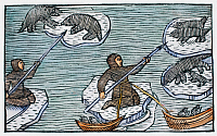0084833 © Granger - Historical Picture ArchiveGREENLAND ESKIMOS, 1555.   Eskimos sealing among ice-floes in Greenland. Woodcut from Olaus Magnus' 'Historia de gentibus septentrionalibus,' Rome, Italy, 1555.