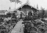 0124349 © Granger - Historical Picture ArchiveALASKA: LOG CABIN.   A log cabin with an attached greenhouse and a large flower garden in the front yard in Nome, Alaska. Photograph, c1900-1923.