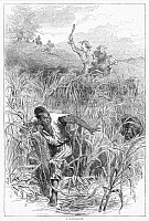 0012584 © Granger - Historical Picture ArchiveSLAVE HUNT, 19th CENTURY.   A slave hunt in the American South. Wood engraving, English, 19th century.