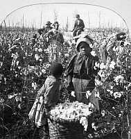 0002900 © Granger - Historical Picture ArchiveCOTTON PLANTATION.   Picking cotton on a Mississippi plantation, late 19th century.