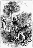 0015312 © Granger - Historical Picture ArchiveSLAVERY: SUGAR PLANTATION.   Wood engraving, 19th century.