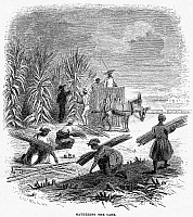 0016779 © Granger - Historical Picture ArchiveSLAVERY: SUGAR PLANTATION.   'Gathering the cane.' Wood engraving, American, 1853.