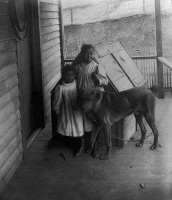 0621297 © Granger - Historical Picture ArchiveGEORGIA: CHILDREN, c1900.   Two African American children with a pet dog, on a porch in Georgia. Photograph, c1899.
