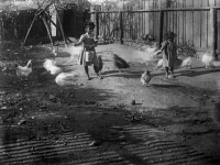 0621299 © Granger - Historical Picture ArchiveGEORGIA: CHILDREN, c1899.   Two African American children feeding chickens in a yard in Georgia. Photograph, c1899.