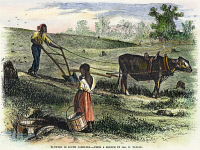 0061581 © Granger - Historical Picture ArchiveFREEDMAN'S FARM, 1866.   A freedman plowing with a steer in South Carolina: colored engraving, 1866.
