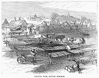 0093730 © Granger - Historical Picture ArchiveCURING FISH, 19th CENTURY.   Drying fish in New England, 19th century engraving.