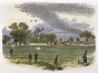 0007431 © Granger - Historical Picture ArchivePIGEON HUNTING, c1875.   Hunters shooting into a huge flock of migrating passenger pigeons. Line engraving, c1875.