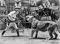 0091662 © Granger - Historical Picture ArchiveLION TAMER, 1930s.   The American animal tamer Clyde Beatty performing in the 1930s.