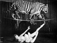 0091680 © Granger - Historical Picture ArchiveCIRCUS: TIGER.   Scene from the film, 'Hippodrome.'