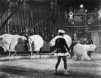0091787 © Granger - Historical Picture ArchiveCIRCUS: POLAR BEARS.   Polar bears and an animal tamer at an American circus performance. Photographed c1930.
